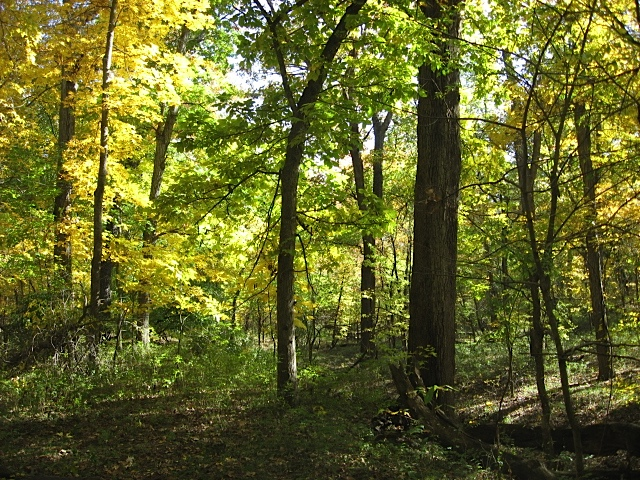 Fall in the woodlands at Mettenburg Farm