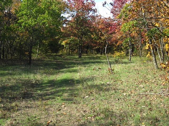 Fall in the woods at Mettenburg Farm