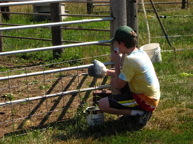 Grandson does some fence painting.
