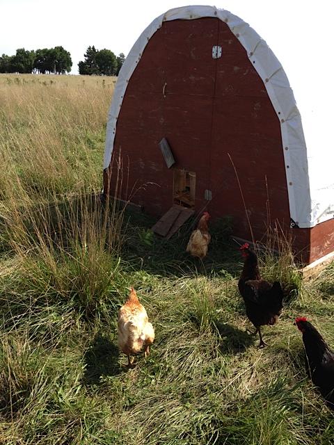Little Hoop House on the Prairie