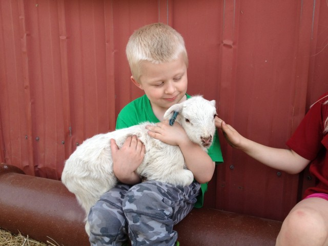 Grandson with new lamb