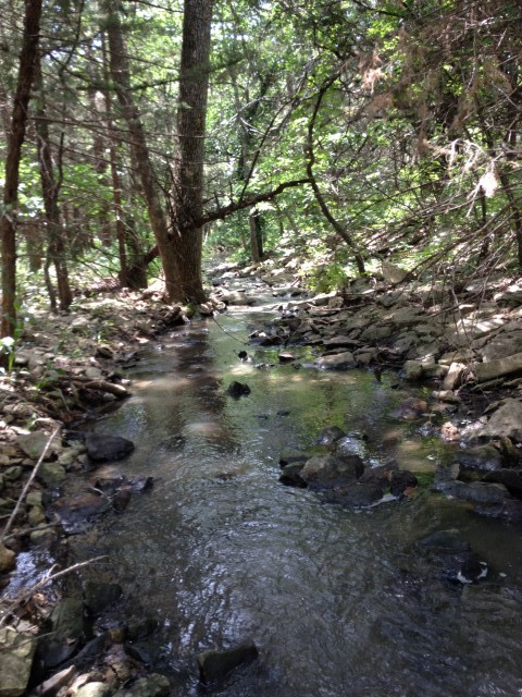Spring-fed stream in the woodlands