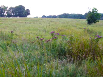 Photo of the area grasslands